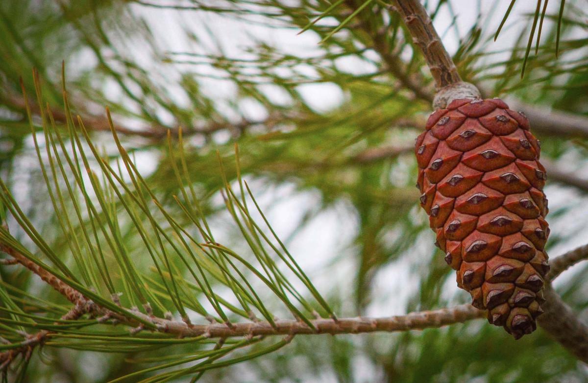 Immagini belle albero ramo foglia produrre for Albero di ananas