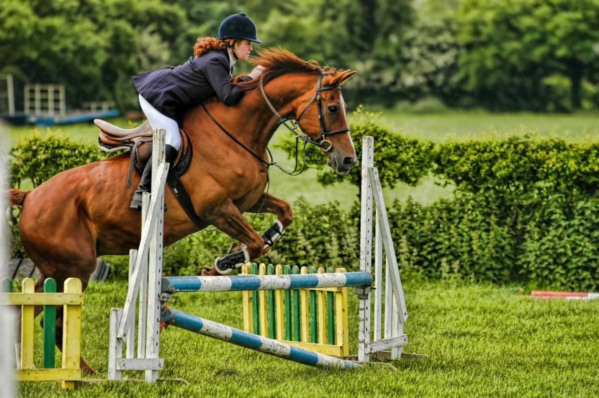 как фотографировать конный спорт