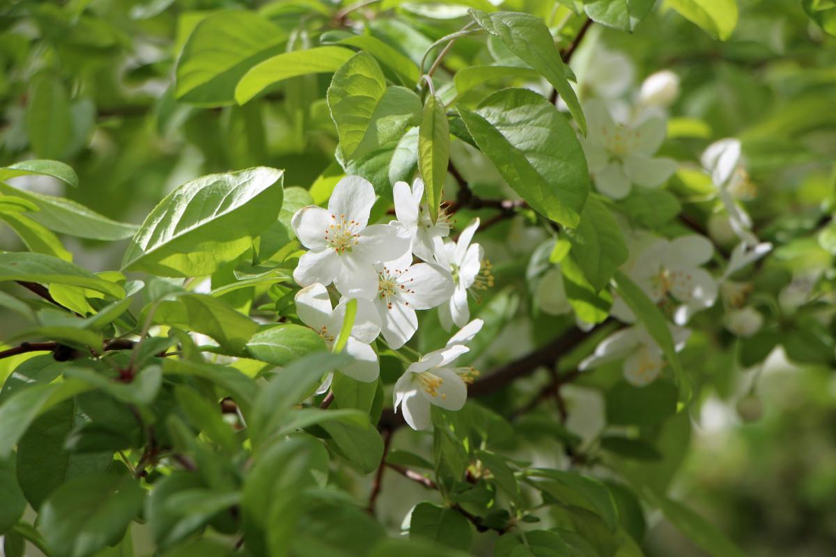 Fiori Bianchi Aprile.Immagini Belle Paesaggio Natura Foresta Fiorire Montagna