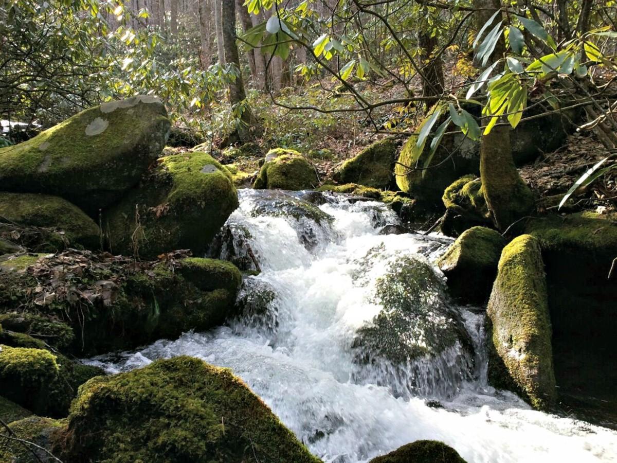 Free Images Landscape Tree Nature Forest Rock