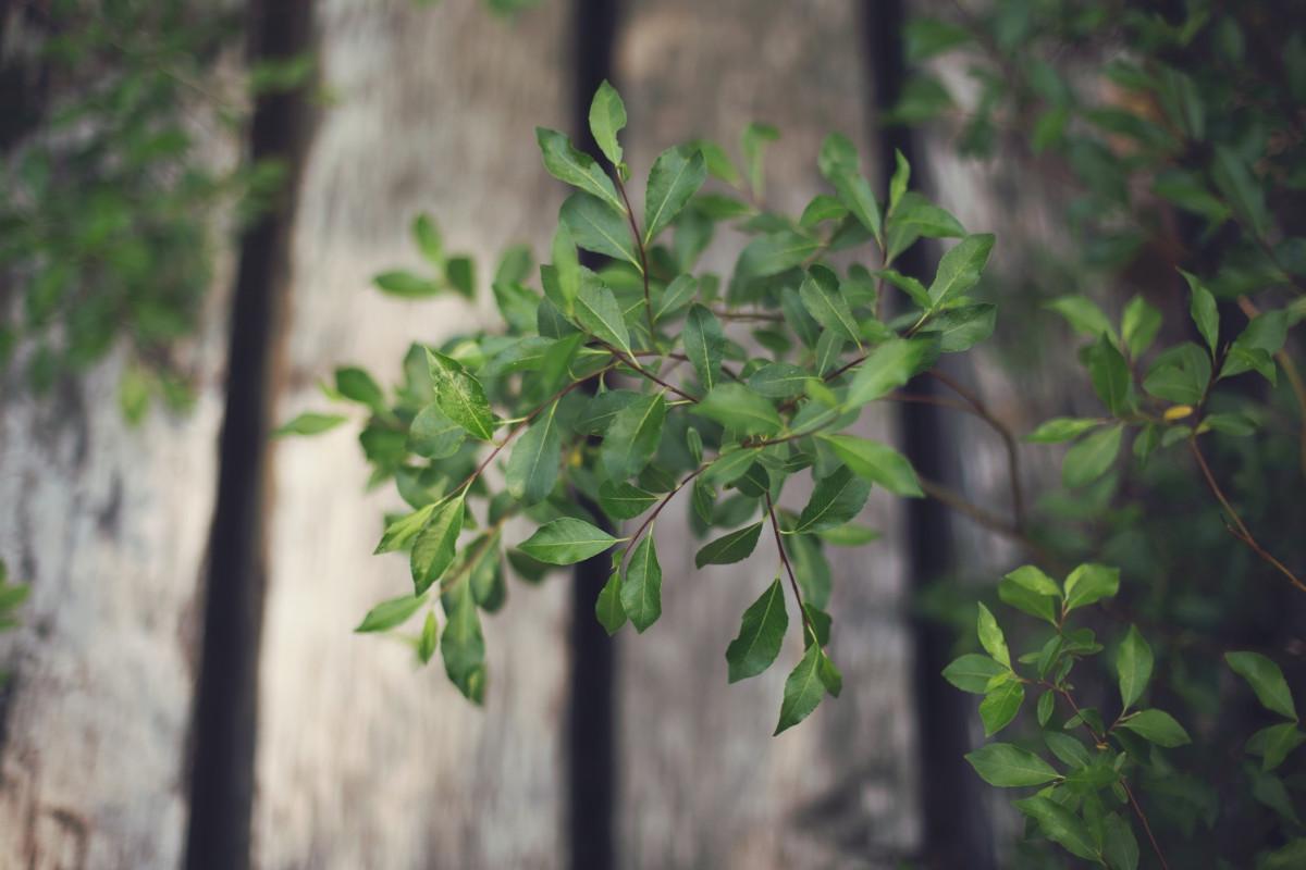 Kostenlose foto Baum Natur Ast Zaun Holz Blatt Blume Grün