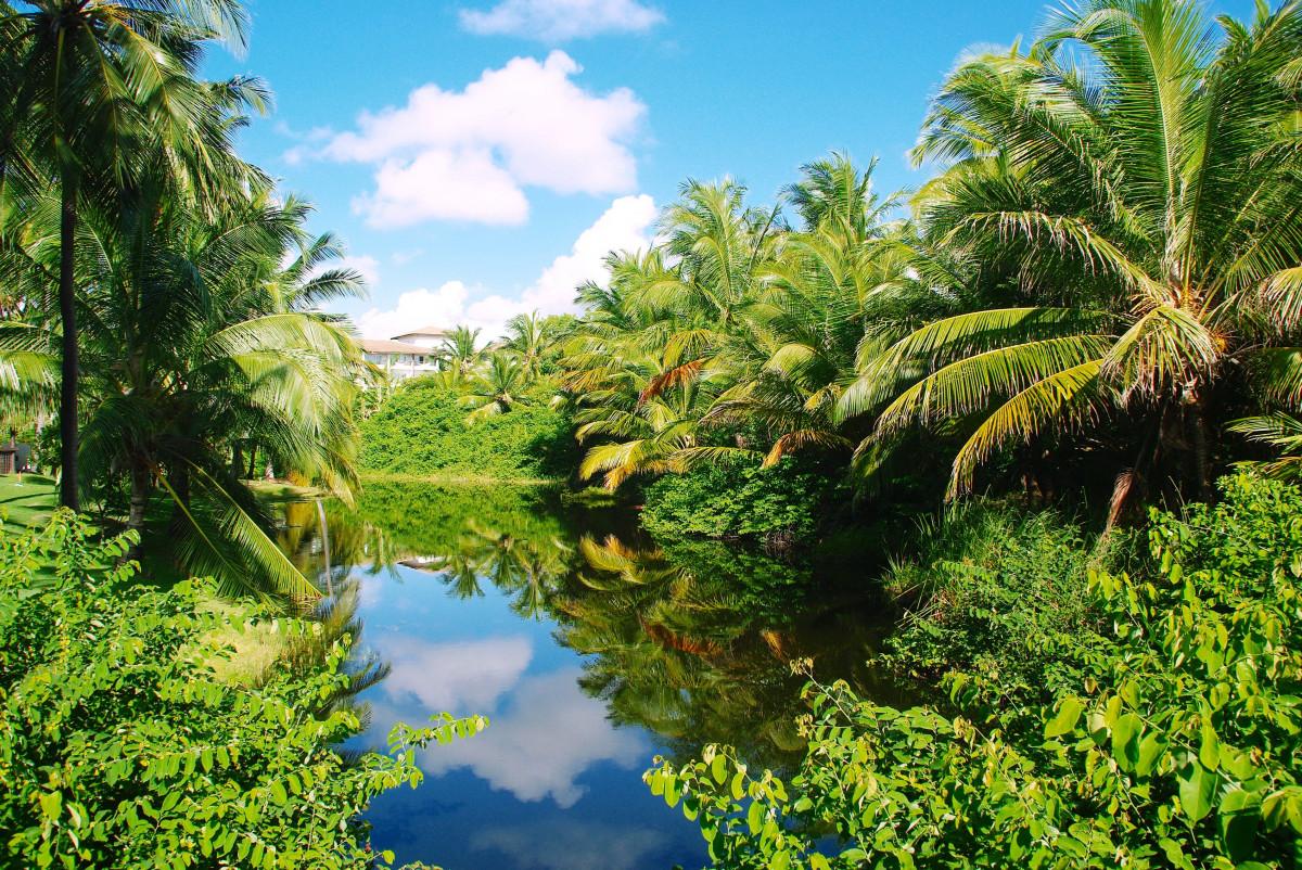 Fotos gratis rbol bosque flor lago r o verde for Arboles del jardin botanico