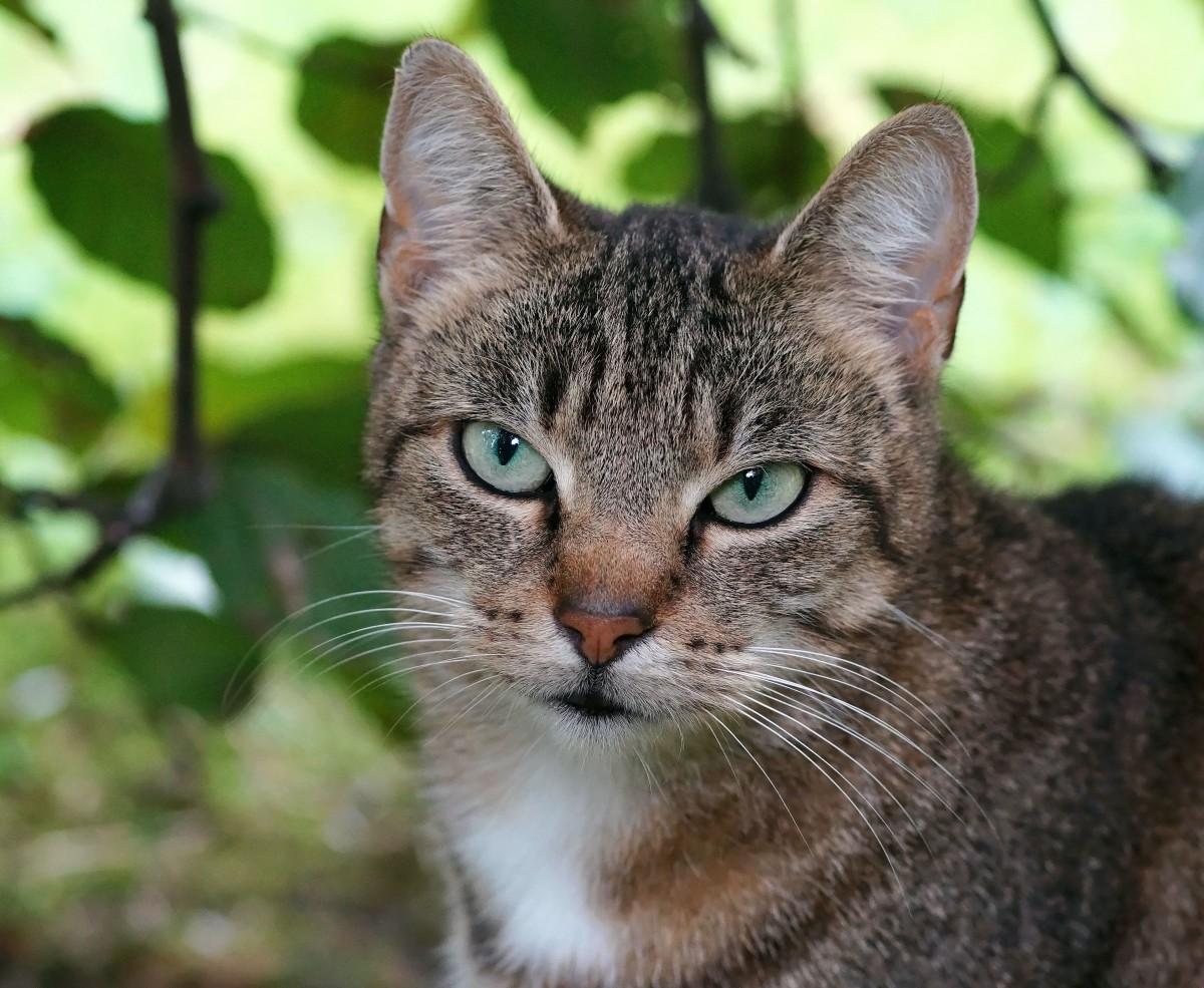 Owlclaw of ShadowClan Cat_female_head_portrait_fur_pet_cheeky_attention-1093148
