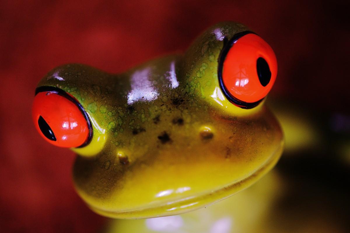 Картинка прикольной лягушки, картинки днем рождения