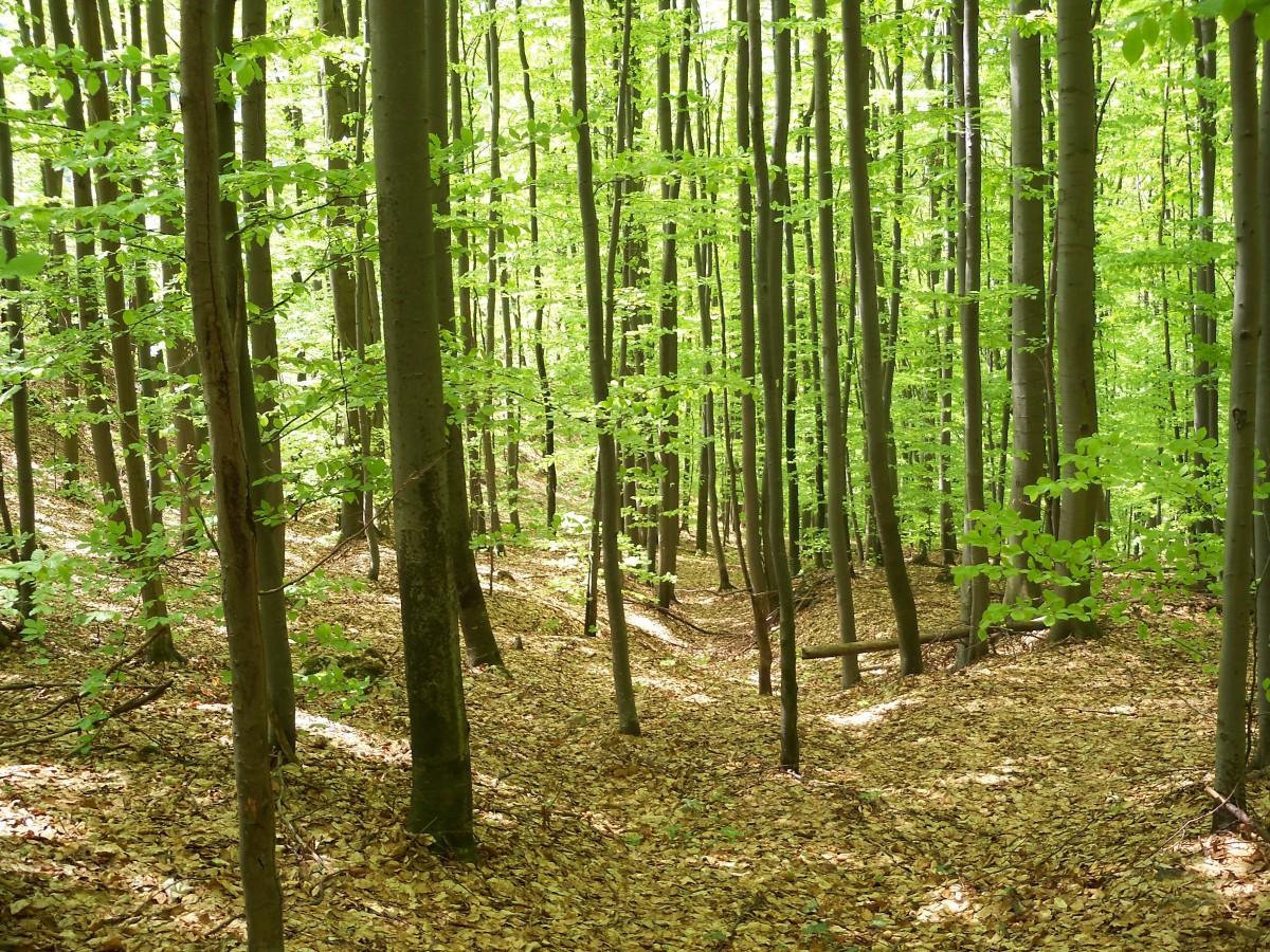фотографии лиственные леса