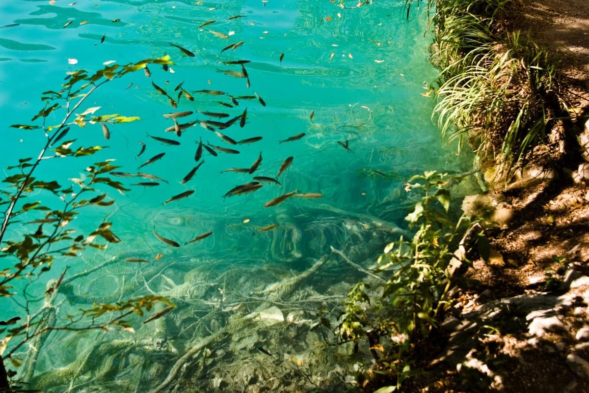 Free images beach sea water nature ocean underwater for Sea water fish