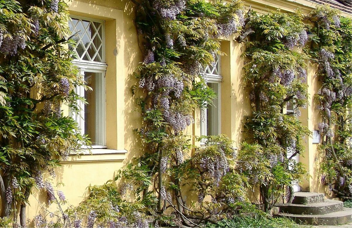 Fotos gratis rbol flor arquitectura villa palacio casa florecer edificio primavera - Ley propiedad horizontal patio interior ...