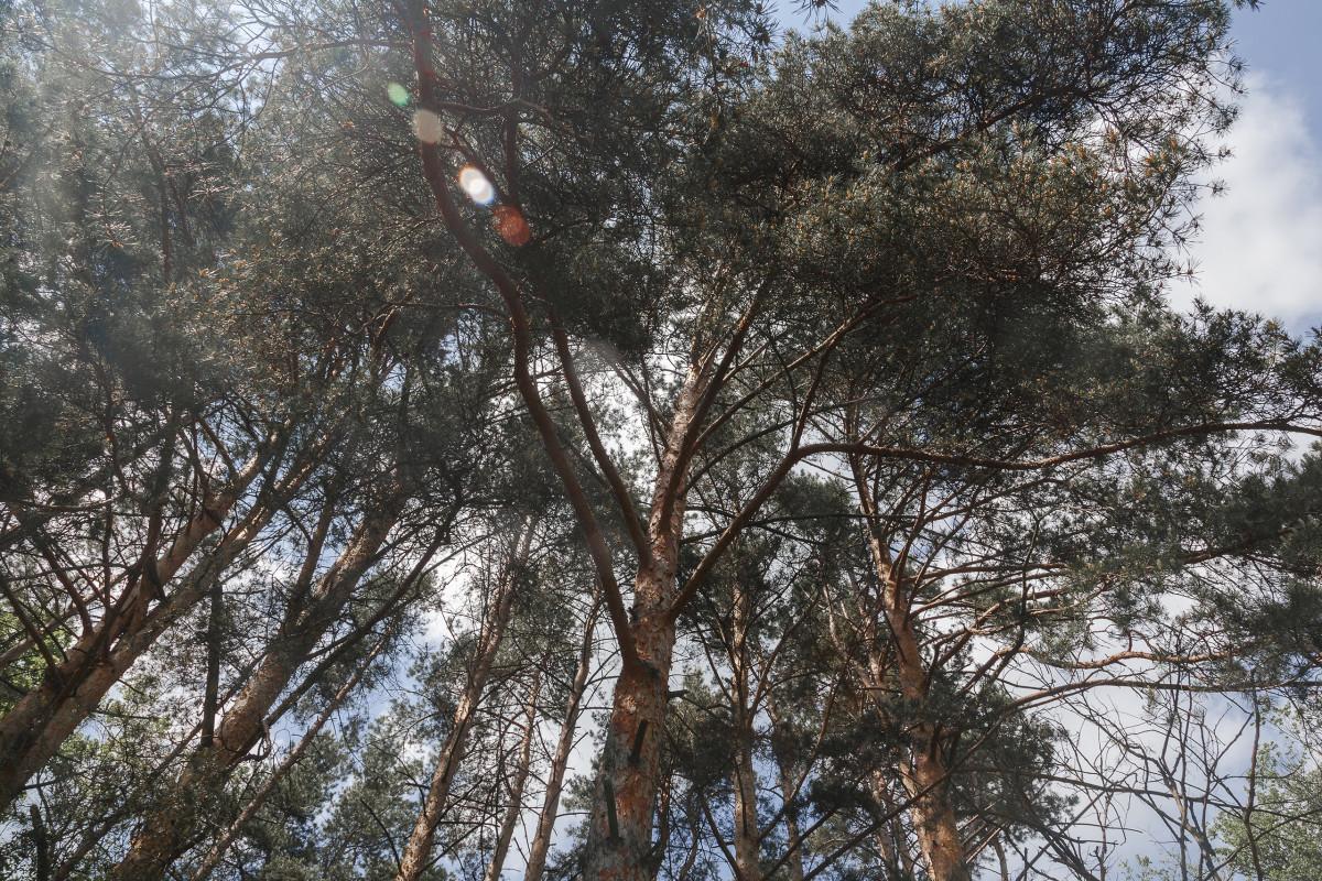 Fotos gratis rbol nieve invierno planta temporada for Arboles en invierno