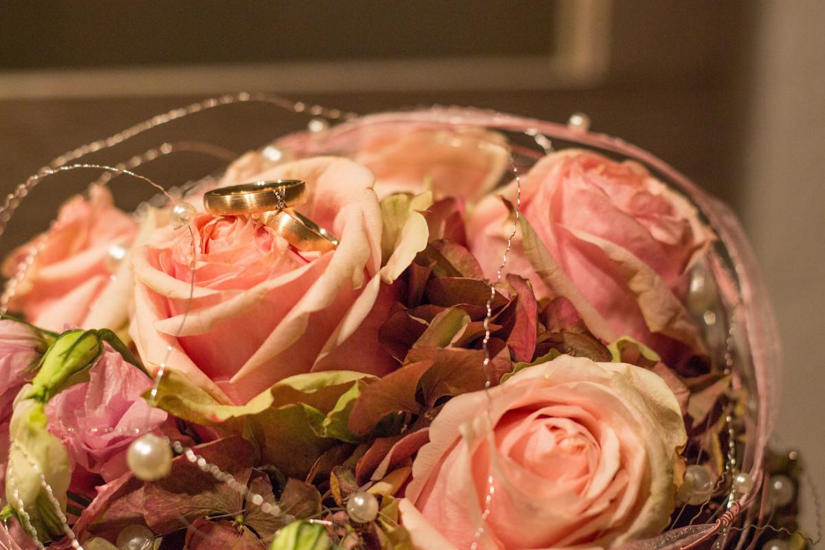 Gratis afbeeldingen fabriek ring bloem bloemblad