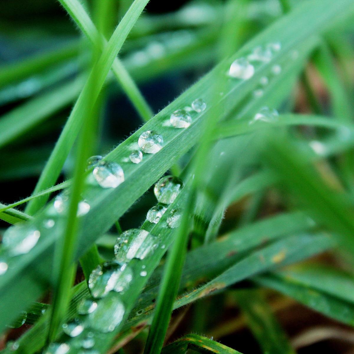 Фото росы на траве — 9