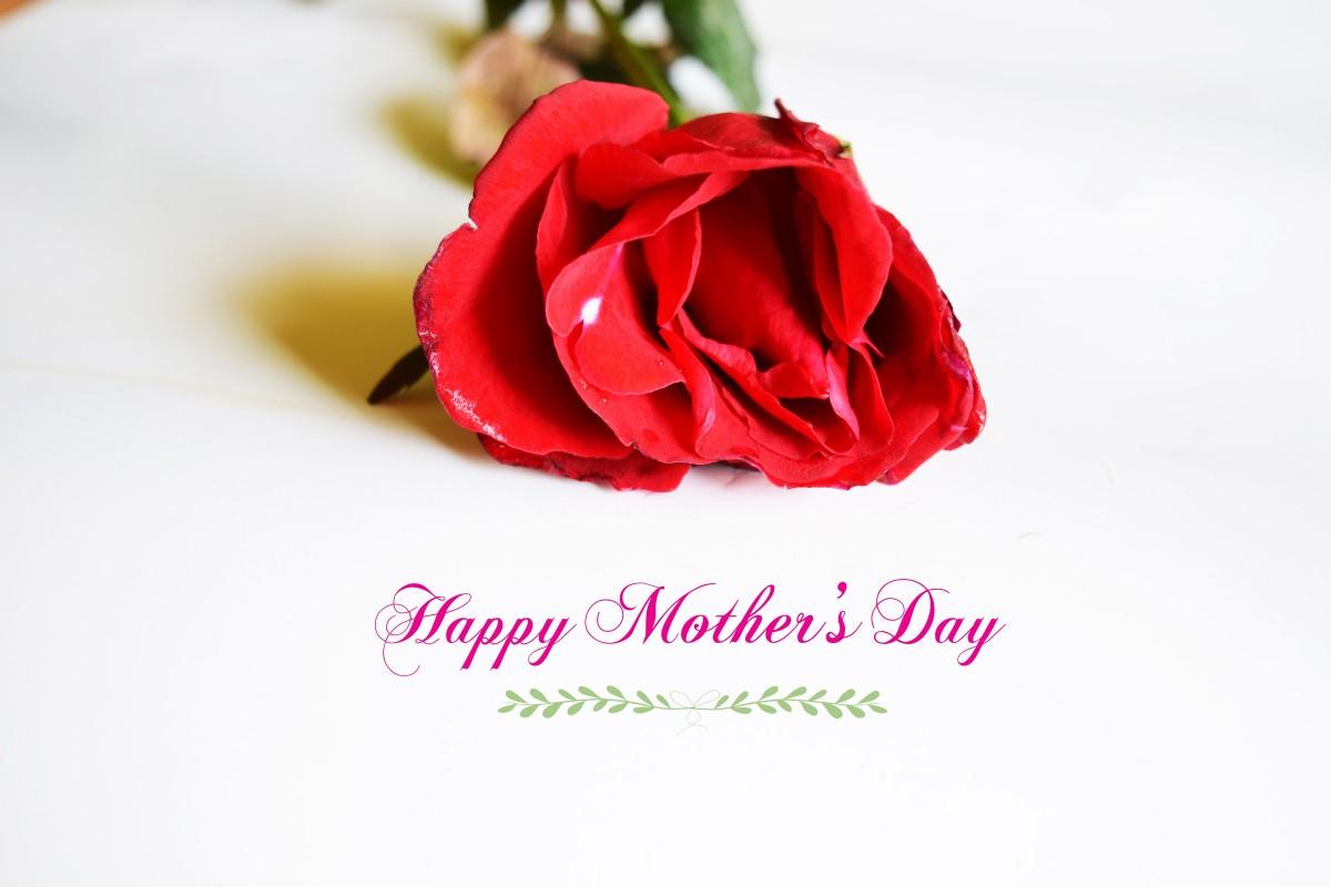 Free Images : flower, petal, tulip, decoration, spring ...