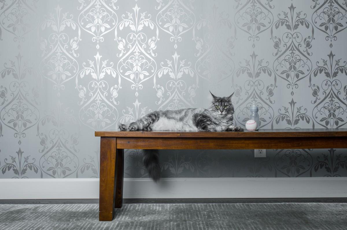 Gratis billeder : tabel, træ, etage, væg, stue, møbel, Indretning ...