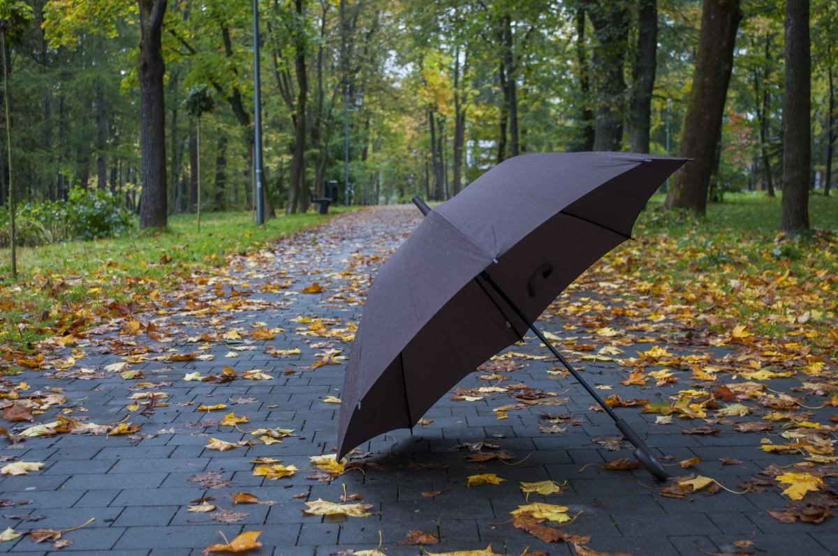 открытки осень зонт солнце фото автояркость
