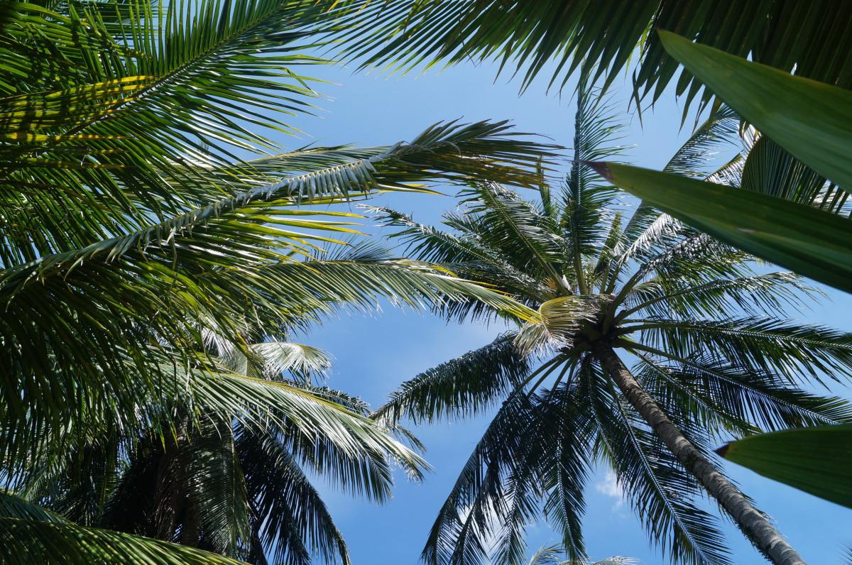 Фото красивого леса с пальмами