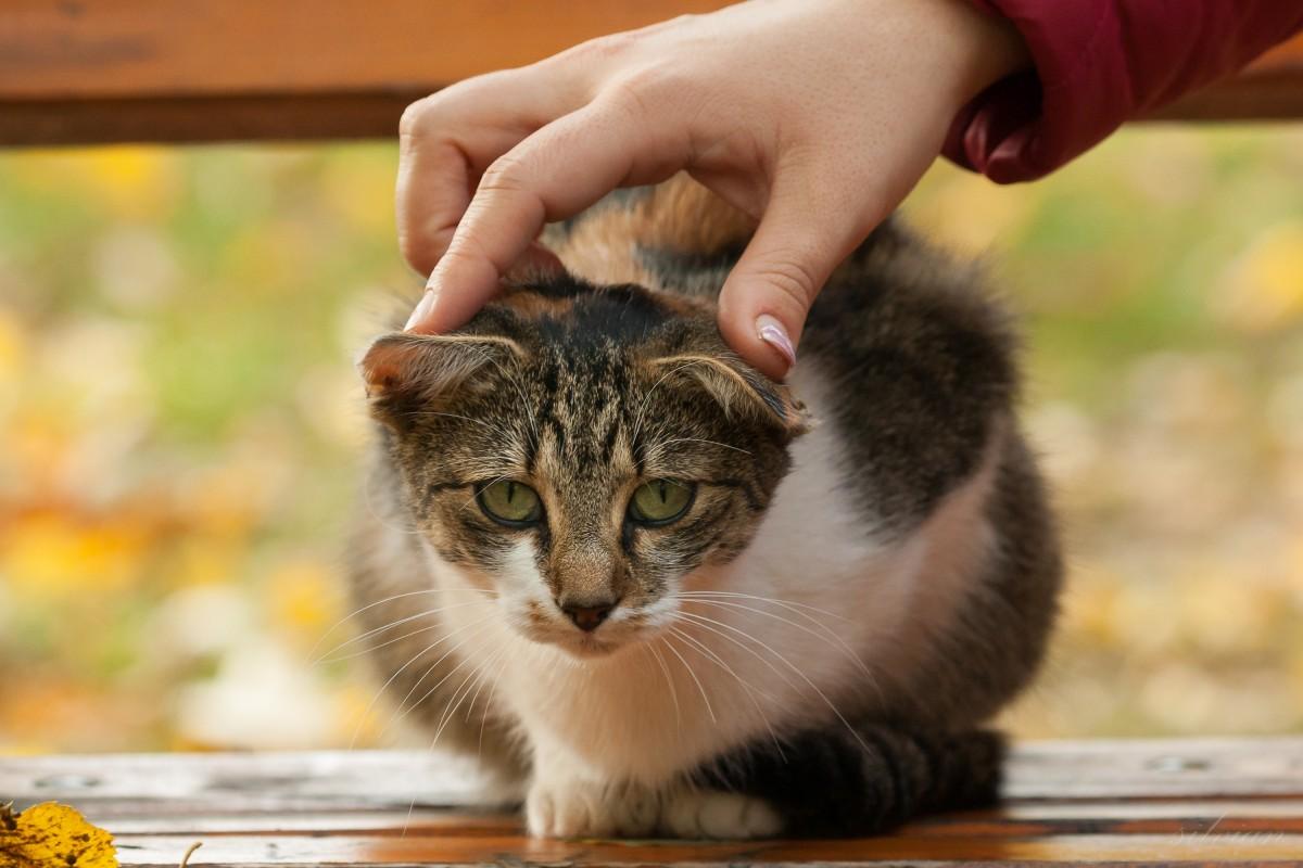Красивые руки гладят котенка фото