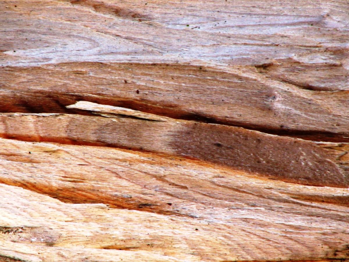 무료 이미지 : 분기, 조직, 널빤지, 트렁크, 흙, 재목, 견목, 나무 ...