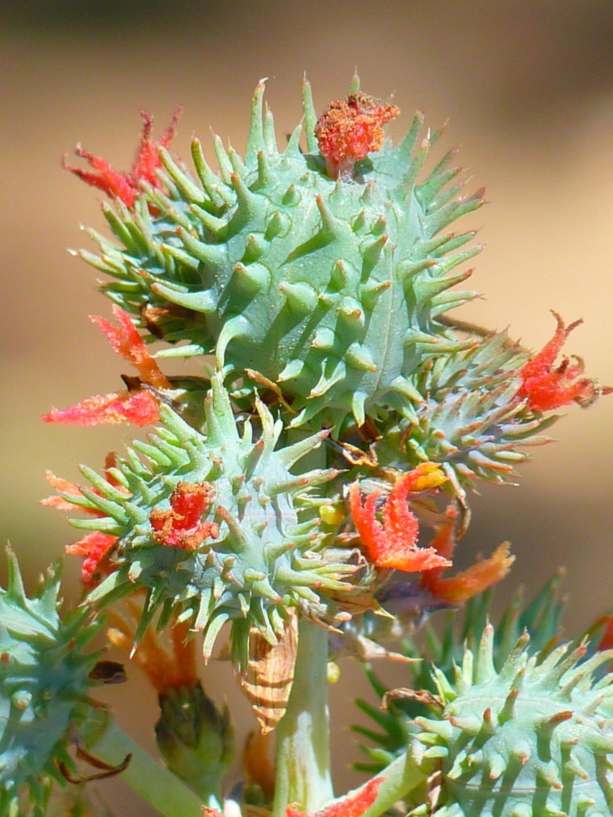 Images gratuites la nature branche fleur plante for Plante ligneuse