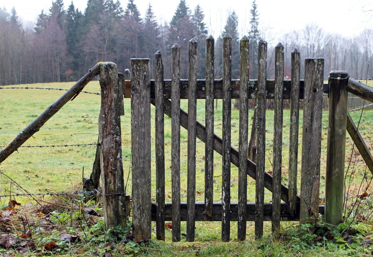 Staket stängsel staket : Bakgrundsbilder : natur, blomma, staket, trä, gräsmatta, sommar ...