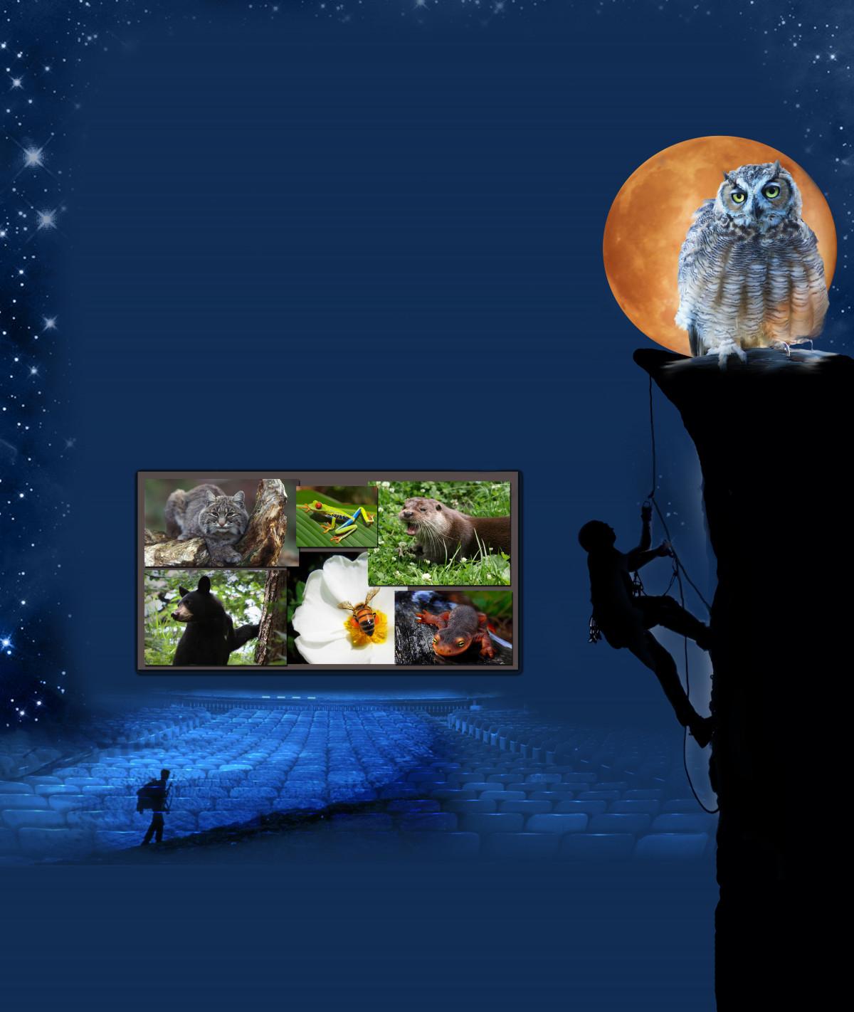 Gambar Alam Hiking Malam Gelap Beruang Kucing Biru Panjat