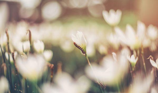 nature,grass,branch,blossom,bokeh,blur