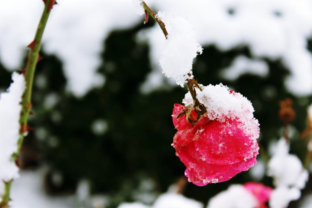 Открытка цветы зима