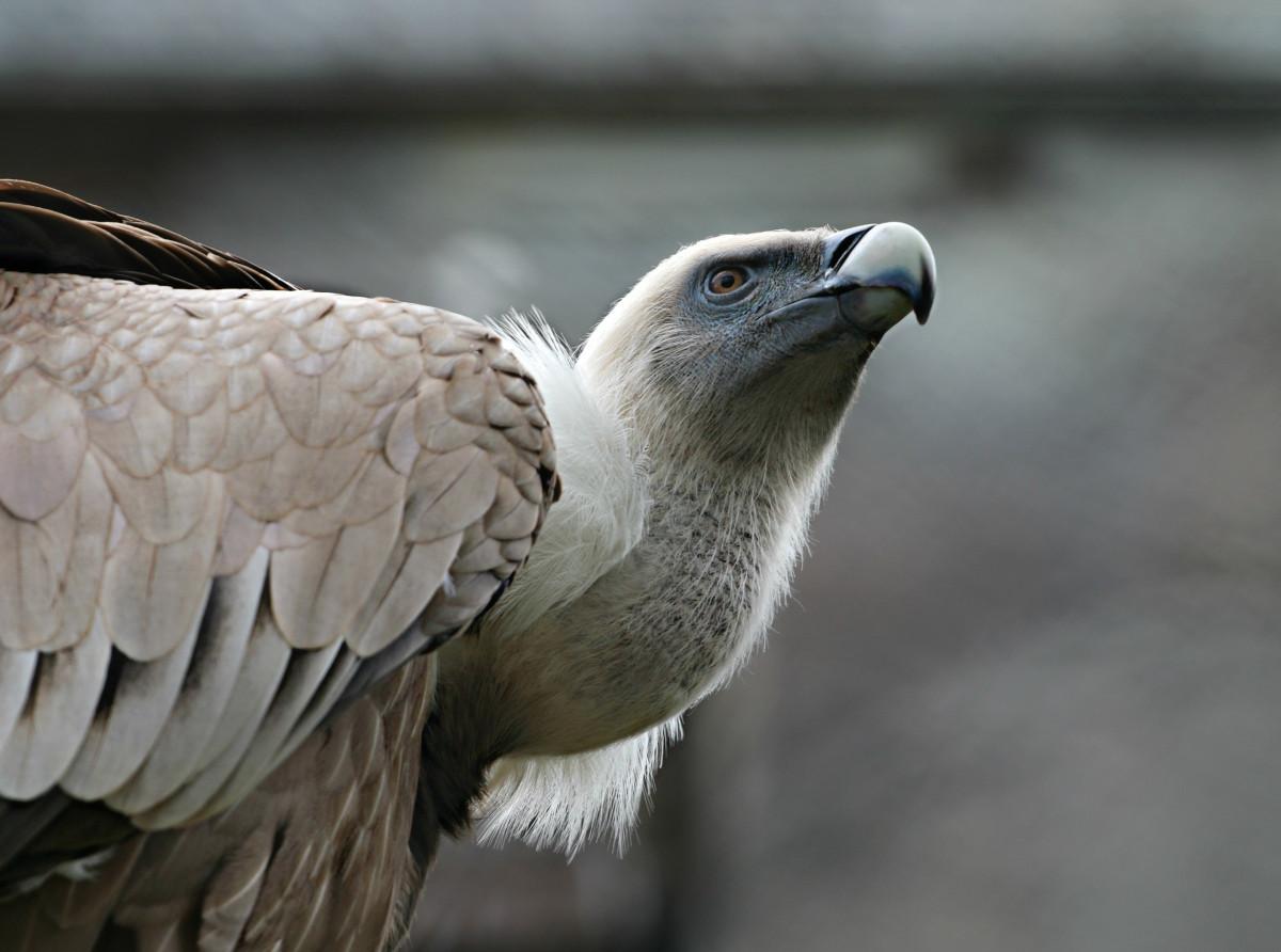 картинки серого орла себя красивой сне