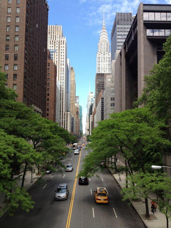 tree,architecture,sky,road,skyline,street
