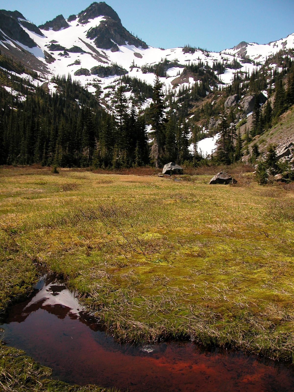 무료 이미지 : 경치, 나무, 자연, 잔디, 목초지, 꽃, 못, 풍경화 ...