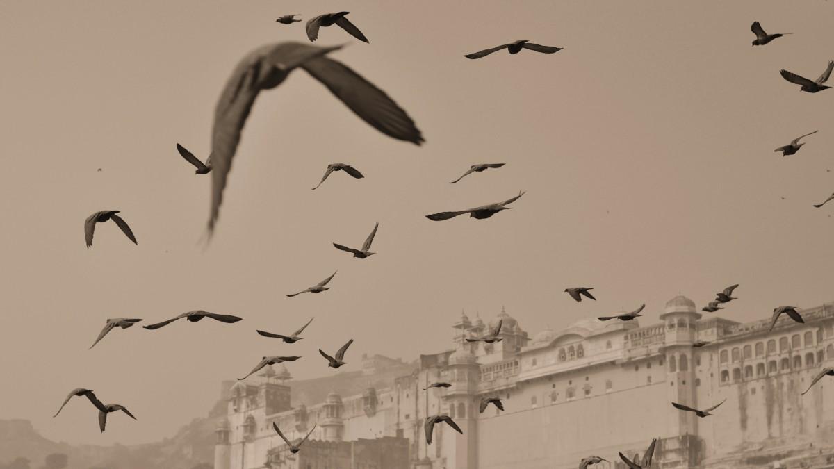 Gambar Sayap Burung Laut Kawanan Seni Sketsa Gambar