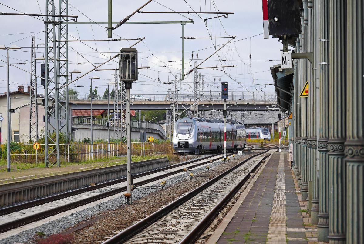 Gratis afbeeldingen natuur bos spoor brug trein vervoer baldakijn voertuig openbaar - Leefgebied canape ...