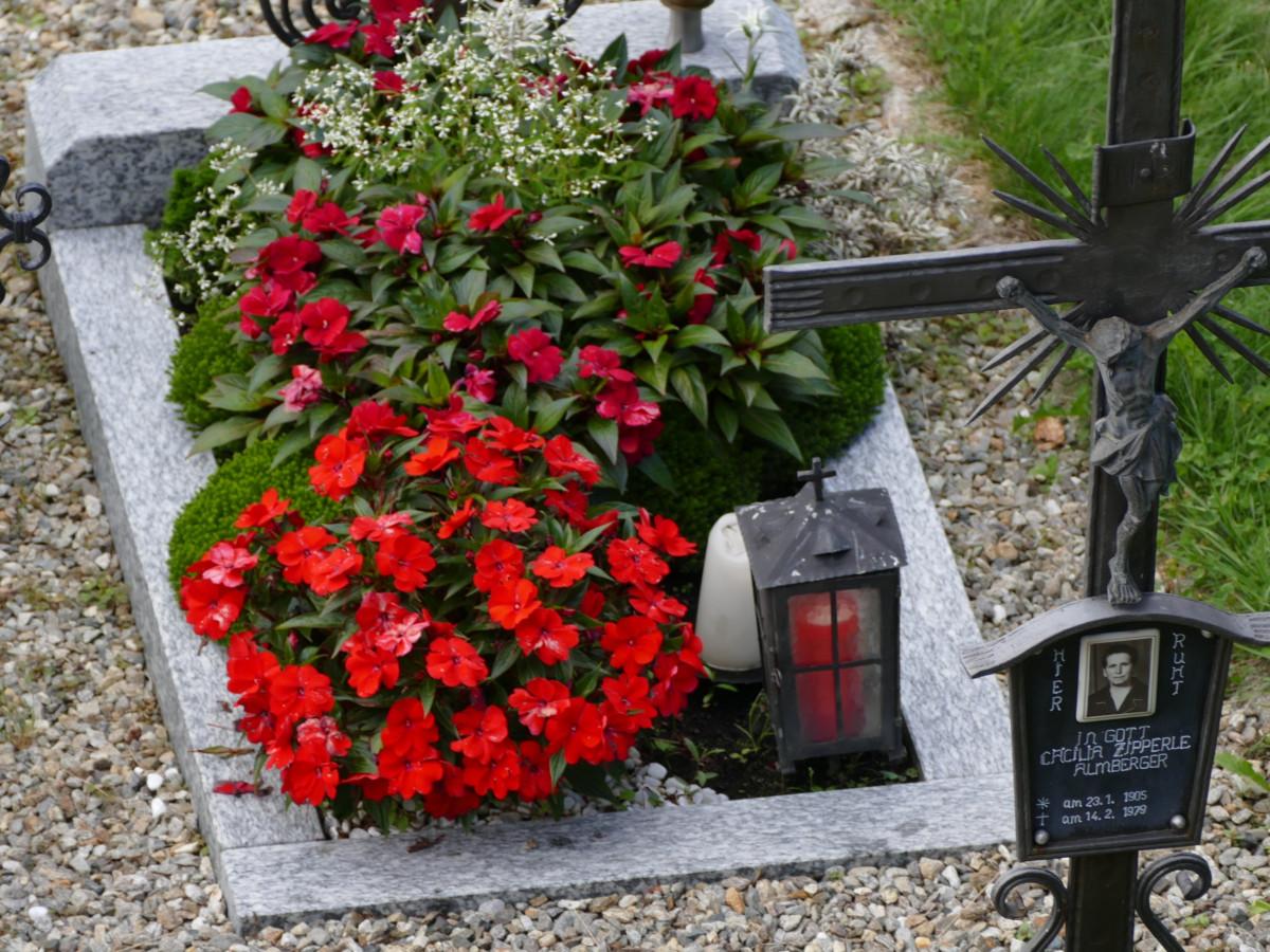 thực vật hoa bình yên Nghĩa trang vườn Hệ thực vật Áo phần mộ Cây bụi Sự thánh thiện sân Trồng hoa tang chế thực vật có hoa Nghĩa địa cũ Thiên thần của mẫu Anh Nhà máy đất