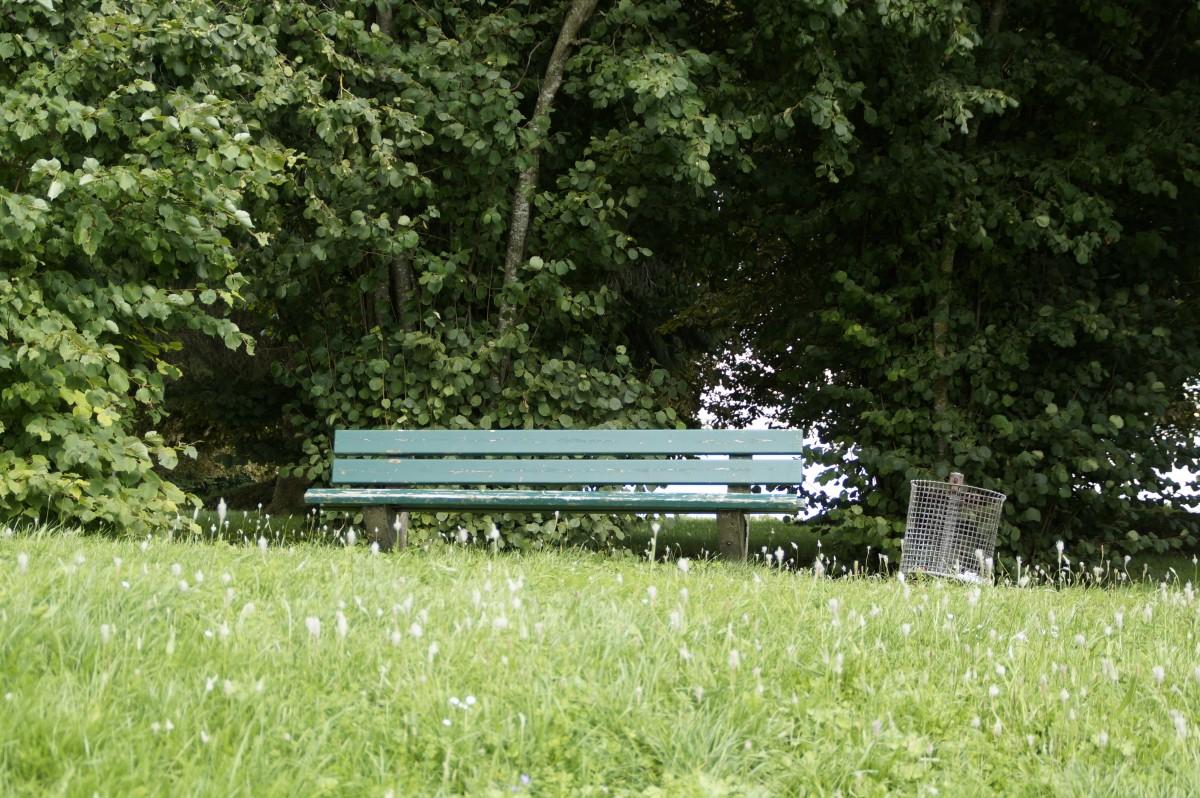 무료 이미지 : 잔디, 목초지, 잎, 봄, 녹색, 휴식, 정원, 공원 벤치 ...