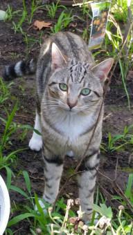 www krásne mačička pics