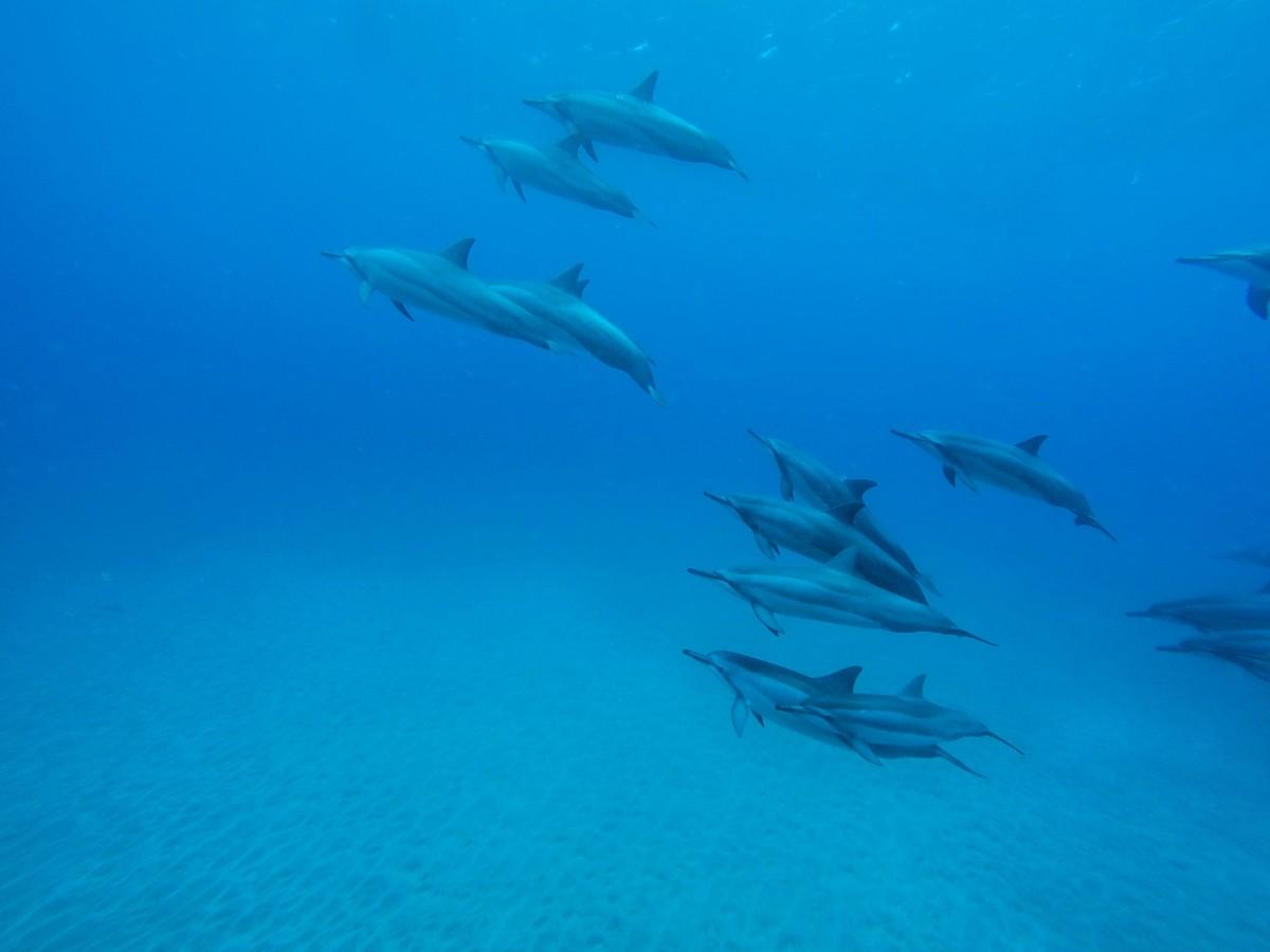 Free Images : sea, ocean, underwater, couple, blue, fish ...