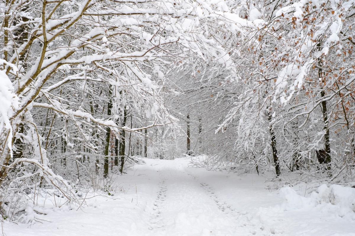 Картинки красивые со снегом показать, собака