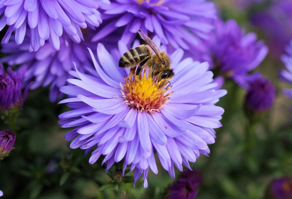 images gratuites fleur violet p tale orange pollen couleur botanique bleu flore. Black Bedroom Furniture Sets. Home Design Ideas