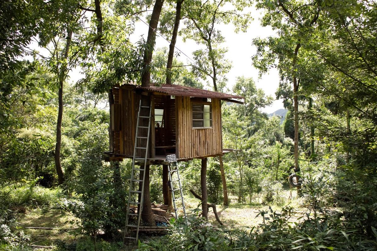 Fotos gratis bosque sendero choza selva caba a de - Cabanas de madera en arboles ...
