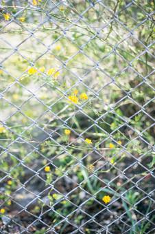 matériel clôture électrique chevaux