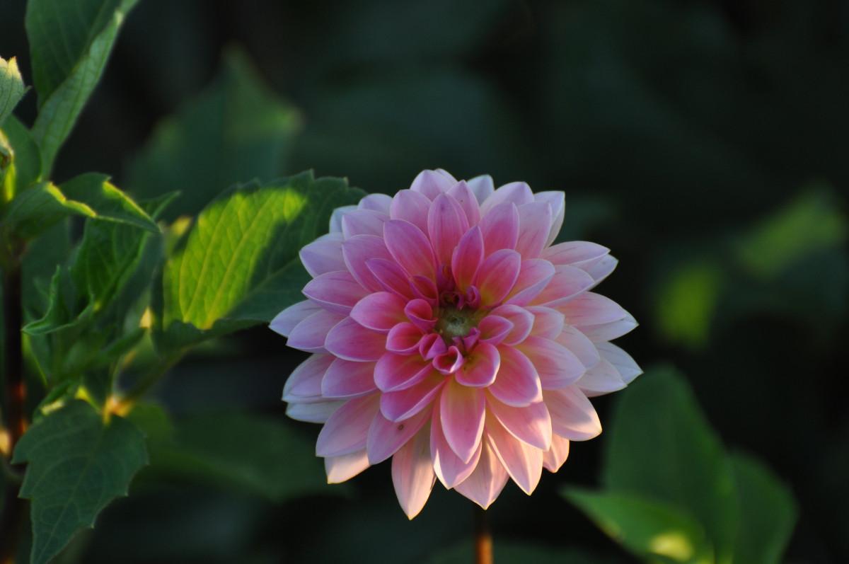 Цветок зеленый друг