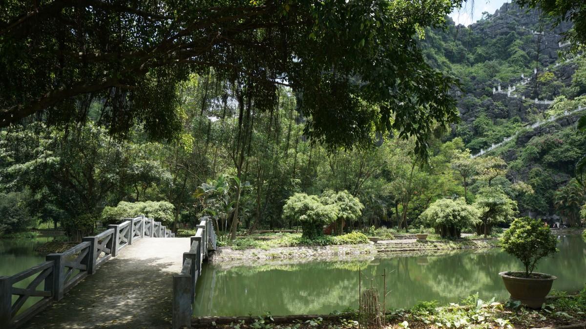 free images forest flower pond green jungle backyard