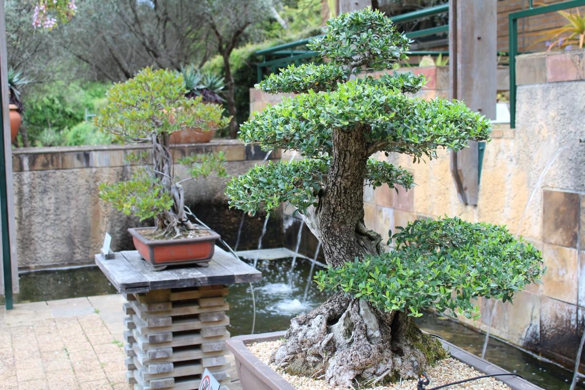 Images gratuites arbre fleur arri re cour jardin plante d 39 appartement des arbres Jardin japonais bonsai