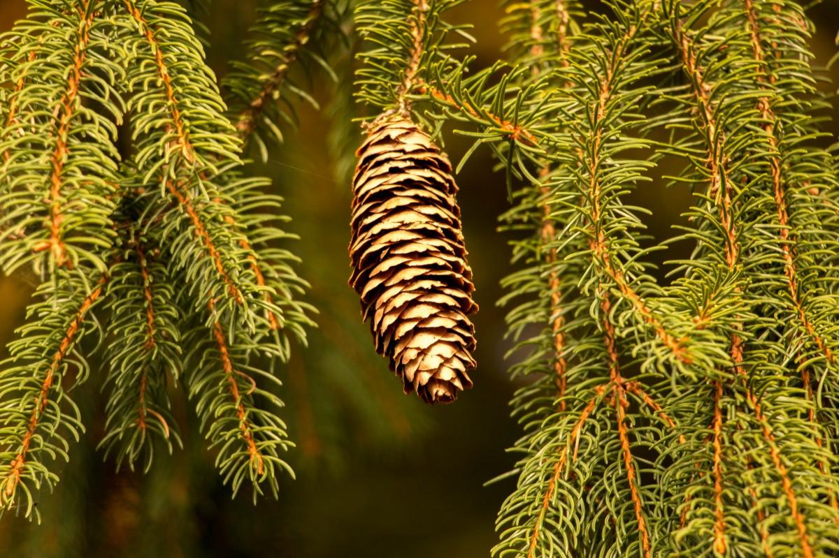 Images gratuites la nature branche plante feuille for Plante ligneuse