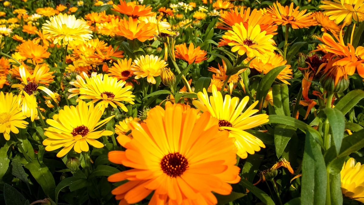 что стороны цветы цветущие в августе фото продемонстрированное выше, показывает