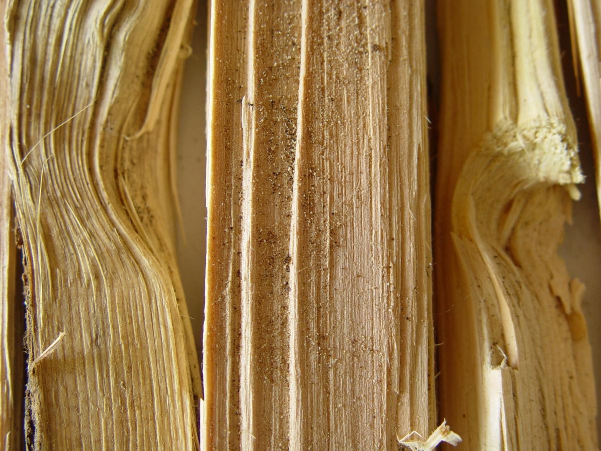 Images gratuites arbre feuille sol tronc b che colonne bois de chauffage bois d 39 oeuvre - Arbre fruitier comme bois de chauffage ...