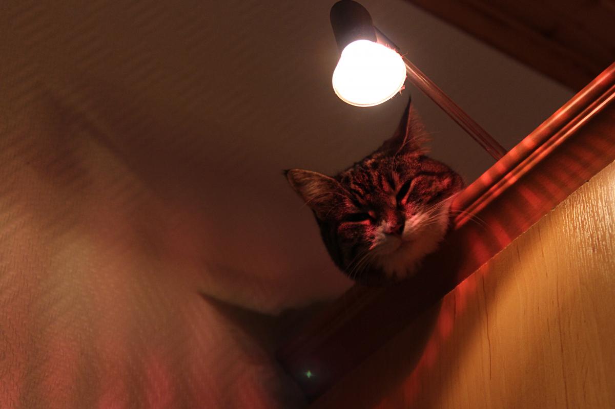Gambar Hewan Imut Membelai Licik Kucing Betina