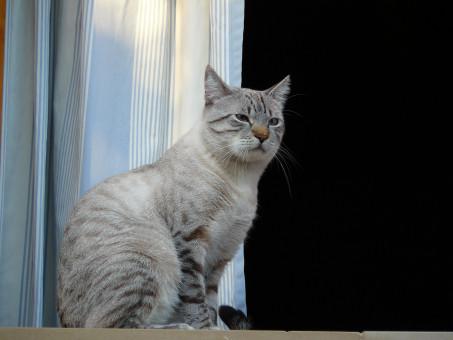Zázvor dievča mačička