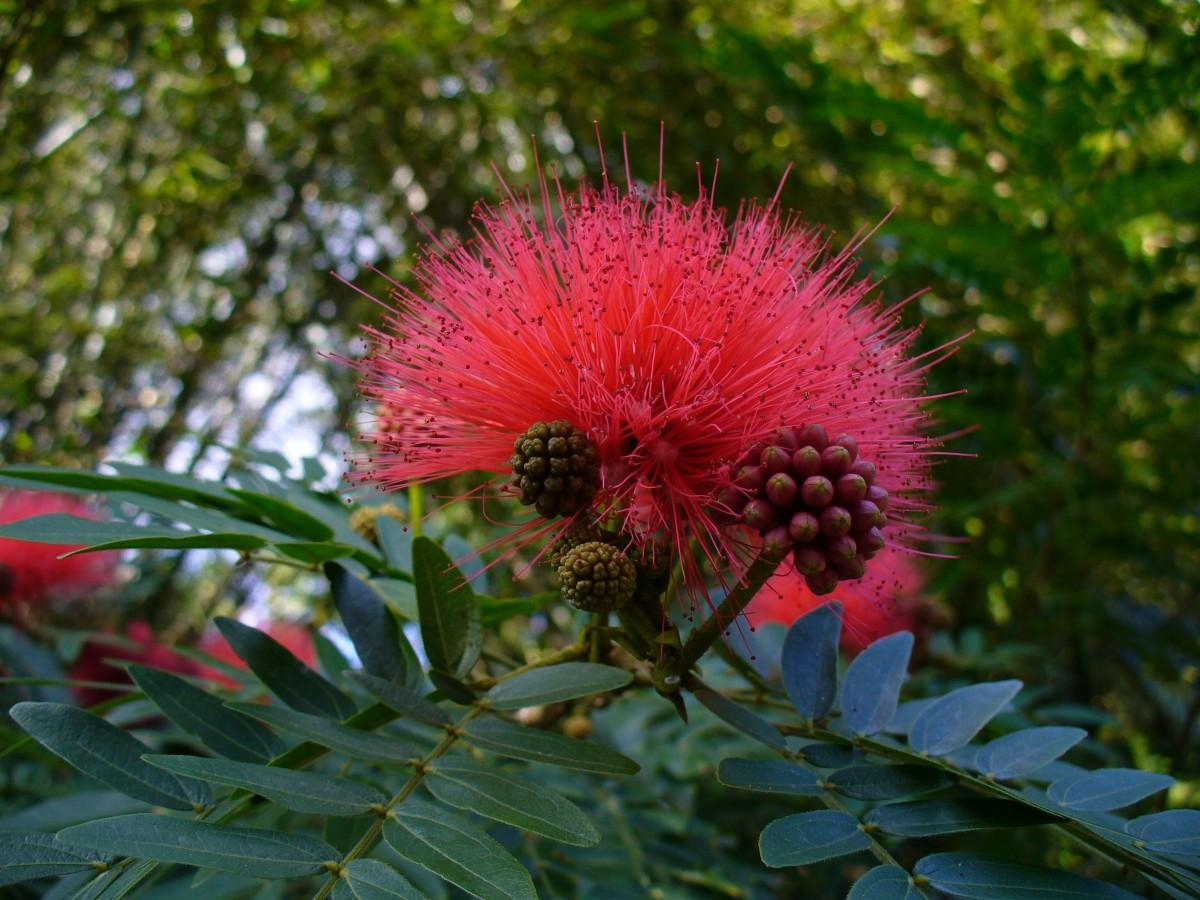 картинки и названия диких цветов волосы