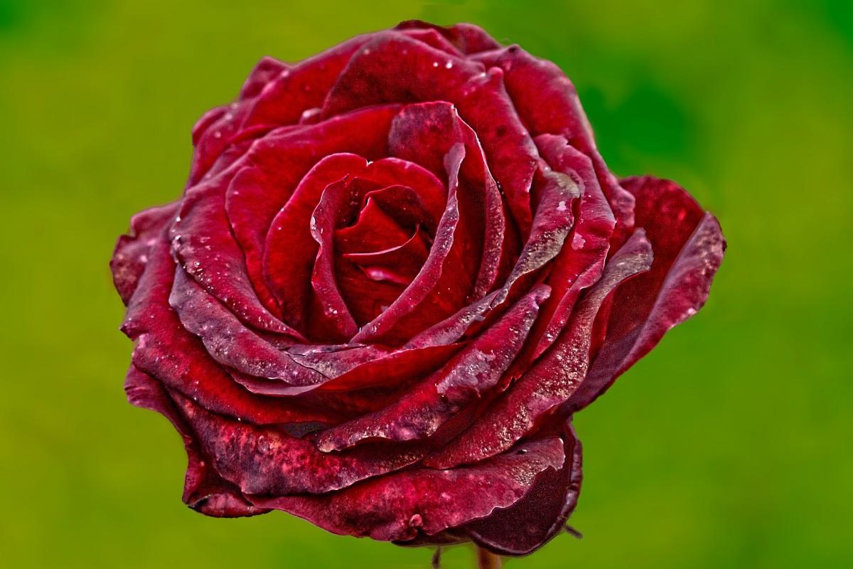 Gambar Alam Menanam Daun Bunga Botani Flora Merapatkan