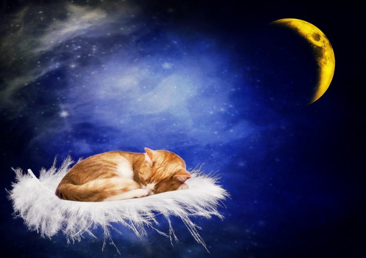 Открытка доброй ночи с котом, картинки карандашом