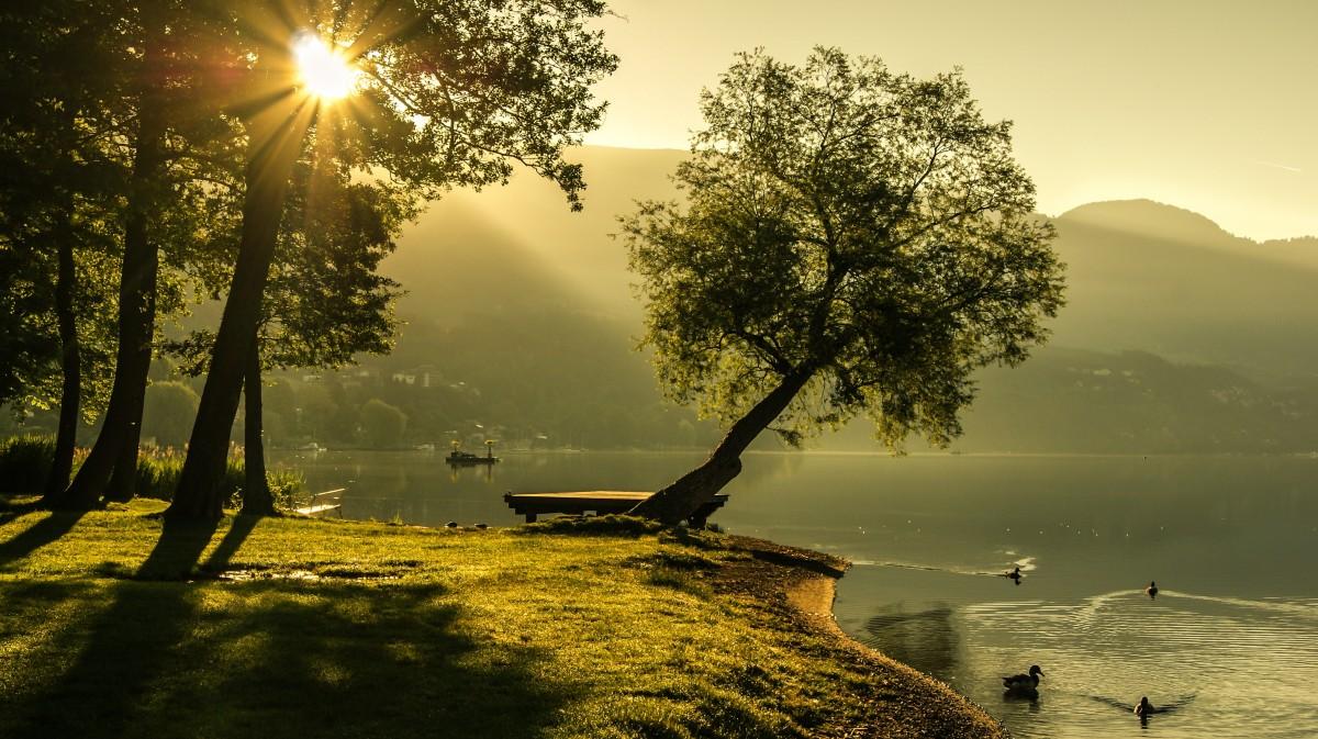 sun fog sunrise trees - photo #3